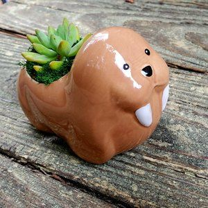 Walrus Animal Planter with Succulent